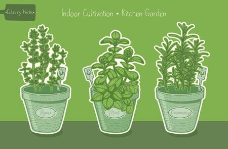Food plants for kitchen garden,thyme and mint and rosemary green hand drawn illustration 向量圖像