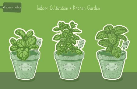 Food plants for kitchen garden, basil and spinach and oregano green hand drawn illustration Ilustração