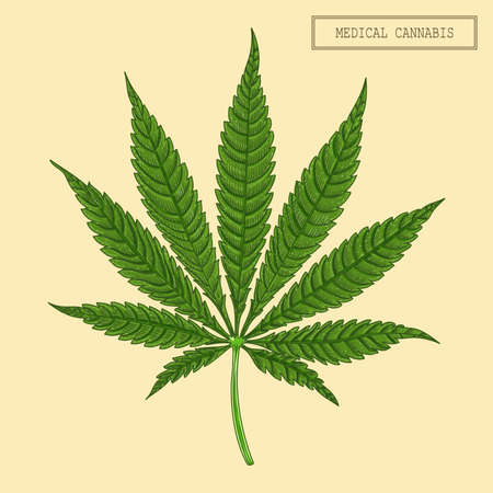 Medical cannabis marijuana nine-pointed leaf, hand drawn illustration in a retro style