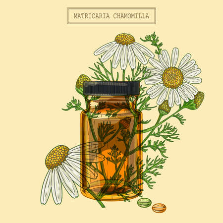 Medical chamomile flowers and vial and pills, hand drawn illustration in a retro style