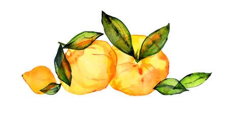 Traced watercolor citrus bouquet Ilustração Vetorial