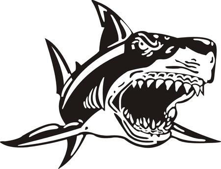 squalo bianco: Squalo