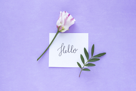 Pink-white flower with word HELLO on pink pastel background. Valentine Day, Mothers day, birthday, spring concept. Minimalistic floral background in flat lay style, top view.