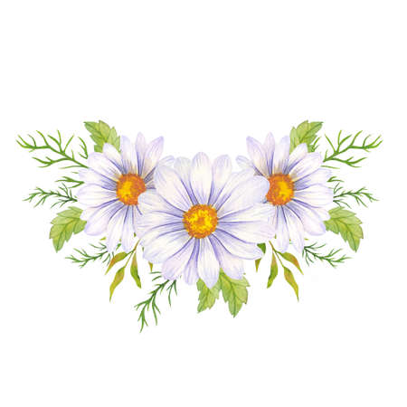 Watercolor daisy bouquet, hand painted daisy bouquets, daisy flower arrangement. Wedding invitation clipart elements. Watercolor floral. Botanical Drawing. White background.Chamomile Watercolor. Stock Photo