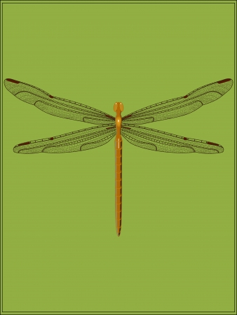 Dragonfly brown Vector