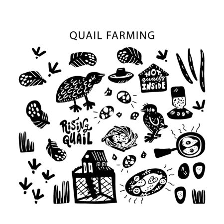 Quail farming modern concept of flat design for merch, banners and package. Hand drawn vector illustration. Set of food objects.