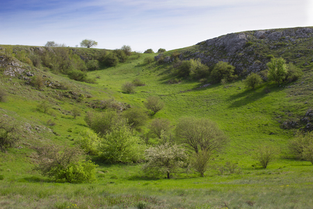 Green ravine in may with blooming cherry at the lower plateau of Chatyr-Dag mountains, Crimea.