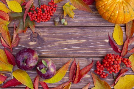 Autumn background with colorful ash-tree and maple leaves, acorns, ashberry, apples and pumpkins.  Frame of fall harvest with copy space. Mockup for seasonal offers and holiday post card, top view.