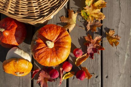 Autumn arrangement of fall harvest. Pumpkins, crab apples, colorful maple leaves, rowanberry and wicker basket.