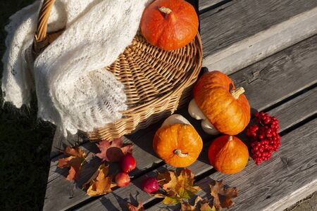 Autumn arrangement of fall harvest. Pumpkins, crab apples, colorful maple leaves and rowanberry near wicker basket with knitted shawl.