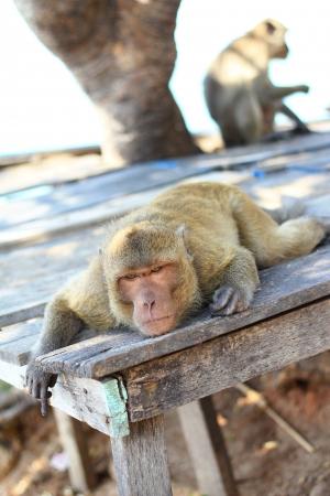 under a tree: Monkeys lying under a tree