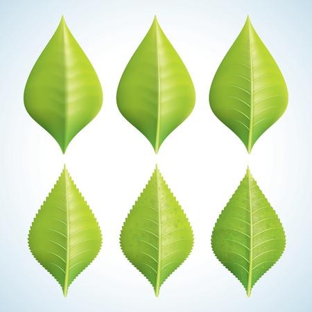 Эволюция зеленые листья Набор