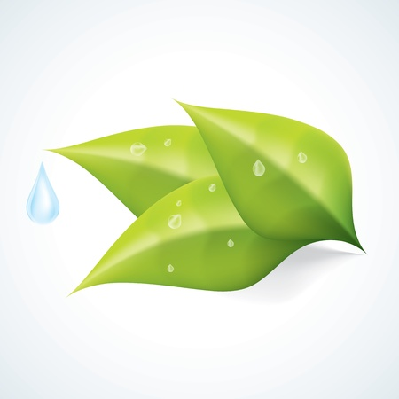 Green Leafs with Water Drop EPS10 Illustration