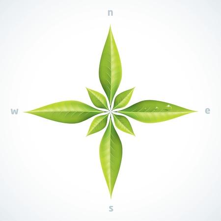 kompassrose: Eco gr�ne Bl�tter Kompassrose