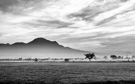 expansive: Black and white photo of very vast, broad, extensive, spacious rice field, streched into the horizon.  Behind it is a line of hills and mountains that also expansive. Lonely tree in far away.  Beautiful cloud and  sky. This photo captured at sunrise