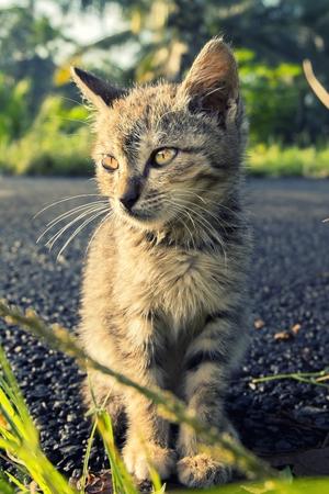 poner atencion: Gato lindo sentarse en el camino, y parece prestar atención a algo interesante Foto de archivo