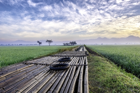 diagonally: The floors are made of bamboo in the middle of rice fields, is used as a place for farmer to start their activity. There also two unused tire, diagonally composed