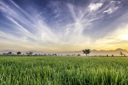 expansive: Very vast, broad, extensive, spacious rice field, streched into the horizon.  Behind it is a line of hills and mountains that also expansive. Lonely tree in far away.  Beautiful cloud and blue sky. This photo captured at sunrise