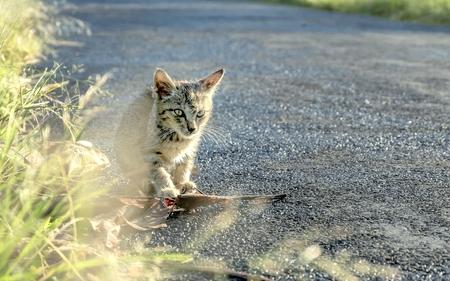 poner atencion: Pequeño gato solo en el lado de la carretera, prestar atención a la carretera
