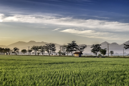 expansive: Very vast, broad, extensive, spacious rice field, streched into the horizon.   Behind it is a line of hills and mountains that also expansive.  Group of tree in far away.  Beautiful cloud and blue sky. Hut in the middle of the rice field.  This photo capt