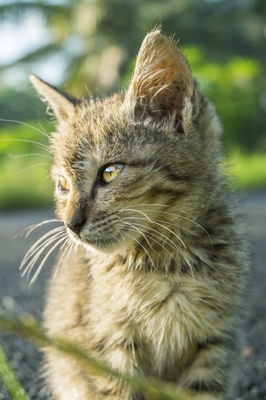 Gato lindo con la expresión seria, y parecen prestar atención a algo
