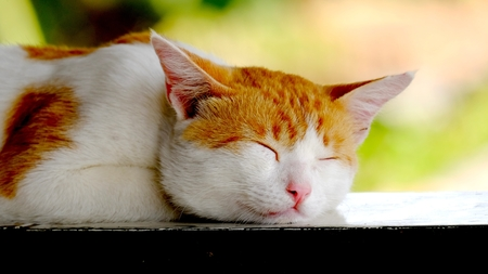 Cute yellow cat, sleeping peacefully, happily, its like there is no problem in his life at all Stock Photo