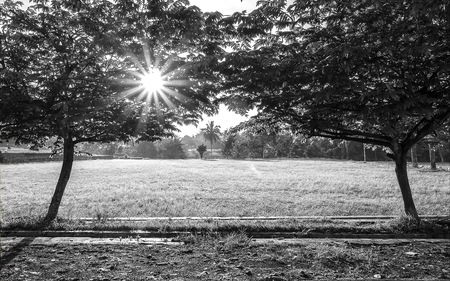 penetrate: Two big trees in left and right, create a gate to open field,  and the light rays penetrate from tree branch