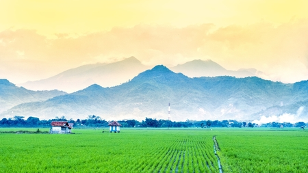 Very vast, broad, extensive, spacious rice field, streched into the horizon. And also two huts in the middle of rice field.  Behind it is a line of hills and mountains that also expansive, and beautiful cloud yellow sky. This photo captured at sunset