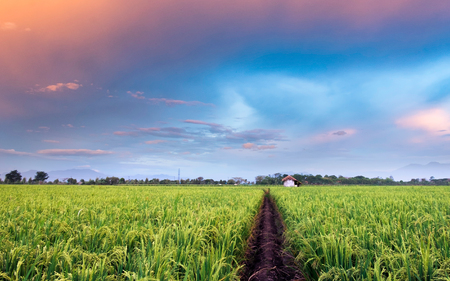 expansive: Very vast, broad, extensive, spacious rice field, streched into the horizon. And also hut in the middle of rice field.  Behind it is a line of hills and mountains that also expansive, and beautiful and colorful sky. This photo captured at sunset, captured