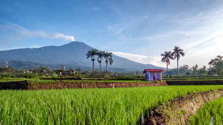 Hut in the middle of rice field, with beautiful big mountain in the background. In the picture is Mt. Slamet, highest mountain in Central Java, Indonesia.