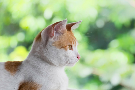 Cat face captured from the side, with flat and serious expression and with beautiful green background Stock Photo