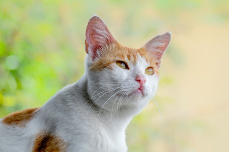 Cute cat portrait, with serious face, seeing something in the top, probably something important and interesting with curiosity and full hope expression Standard-Bild