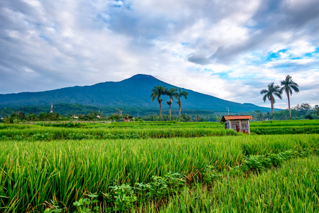 Small hut in front of big mountain, captured from the middle of ricefield. This is Mt Slamet captured in purwokerto, Central Java, Indonesia Stock Photo