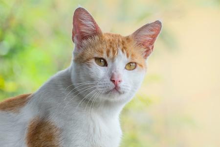 かわいい猫の肖像画、深刻な顔で、フロントでは、おそらく何か重要で興味深い何かを見てください。