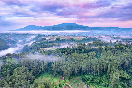 Aerial view of forest and colors of Indonesia, captured at sunrise, showing beautiful purple sky and row of pine tree , located in Keraton Cliff, Bandung, West Java, Indonesia Standard-Bild