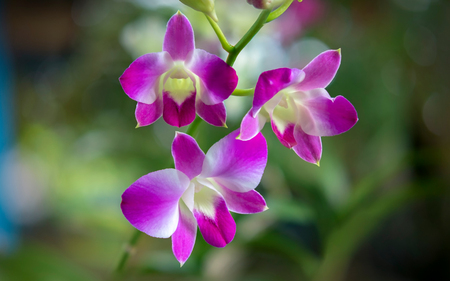 Wild purple orchid. Symbolize admiration, respect, dignity and royalty.