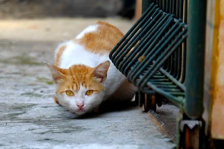その敵を慎重に見ながら、自己を隠すしようとして警告の位置に黄色とかわいい猫