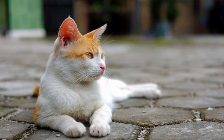 何気なく床に座って、かわいい猫の日。鋭い目つきでフロントを見てください。 写真素材