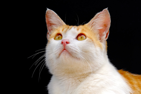 Cat looking upward. White feral cat looking up something on a broad light day.