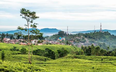非常に広大な茶庭、町、続いてスバン、バンドン、インドネシア付近でキャプチャ、バック グラウンドでタワーの丘、いくつか通信