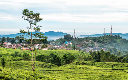 Very vast tea garden, followed by a town, hill and several communication tower in the background, captured in Subang, near Bandung, Indonesia