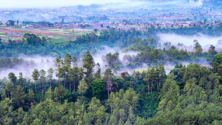 Aerial view of white mist or fog between trees in the forest,  located in Keraton Cliff, Bandung, West Java, Indonesia