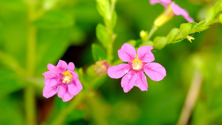 Beautiful little red flowers, with beautiful green background on the back Standard-Bild