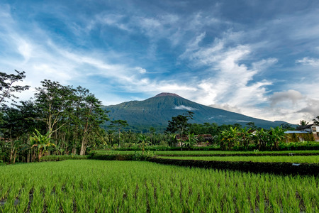 Mt. Slamet  in central java, Indonesia, beautifully captured with rice field as a foreground and beautiful cloud on the top of the mountain Stock Photo