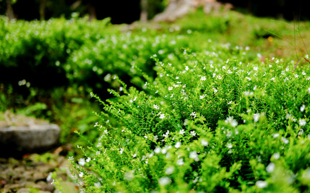 Close up photo of beautiful plant in the garden, with small white flower in it