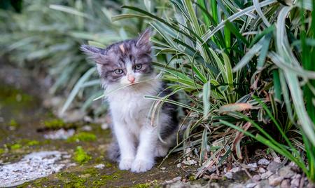 恥ずかしそうに、おずおずと茂みの近くの正面を見て、かわいい白と黒の猫