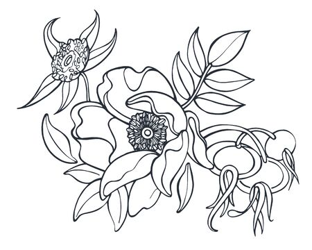 Rose hip flower and berries black and white vector ink illustration isolated on white background Vektorgrafik