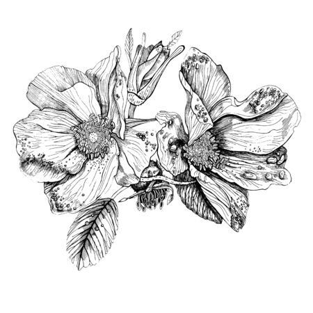 Rose hips flowers, berries and leaves. Vector hand drawn black and white ink illustration isolated on white background.