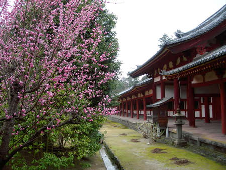 Spring flowers contrasted with a traditional Japanese Temple Gate