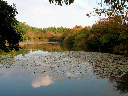 A pond in a Japanese Garden in Kyoto with Autumn Leaves